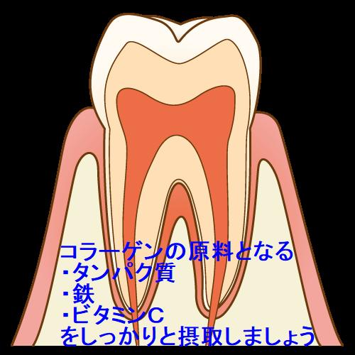 ★コラーゲン 歯.png