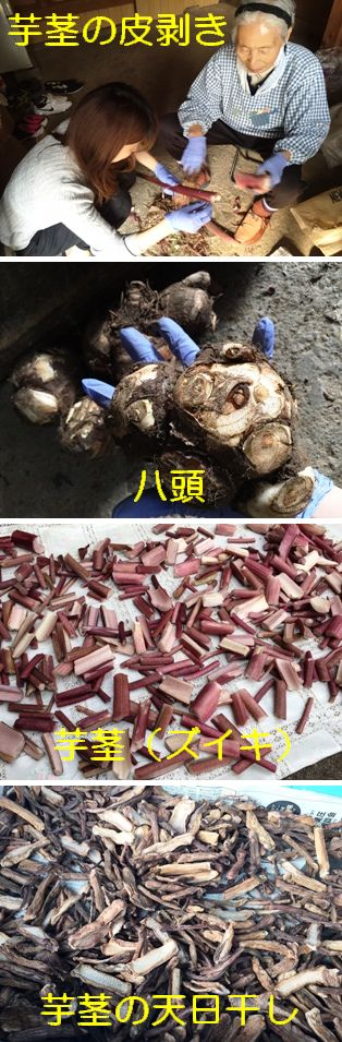 ★芋茎の皮剥き.jpg