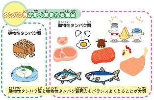 タンパク質が含まれる食品.jpgkj.jpg