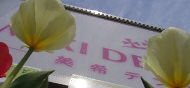 チューリップ咲咲咲.jpg
