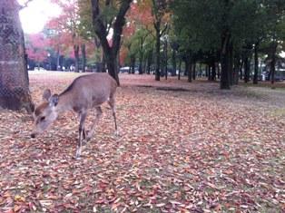 写真奈良公園.JPG5656.JPG