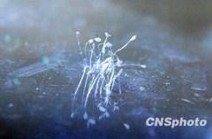 優曇華の花.jpgのサムネール画像のサムネール画像